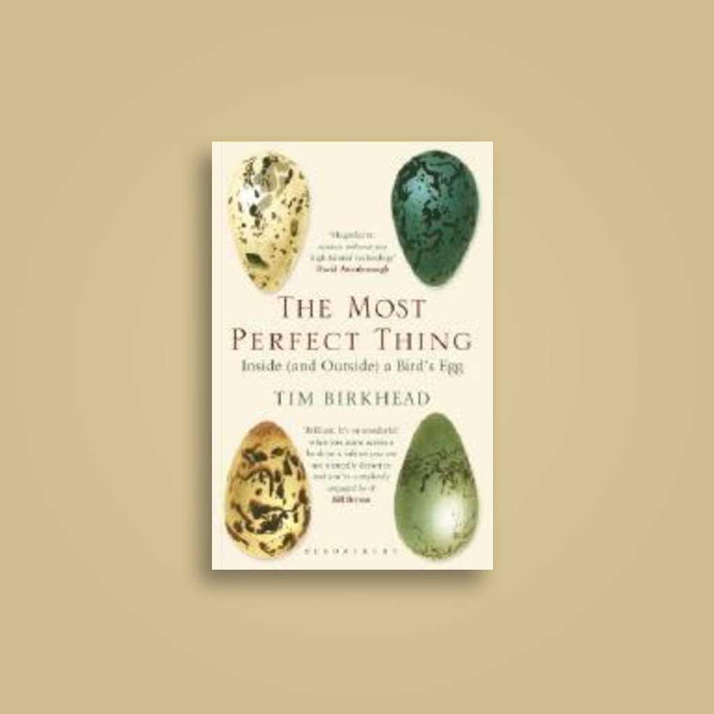The Most Perfect Thing: Inside (and Outside) a Bird's Egg - undefined Near  Me   NearSt