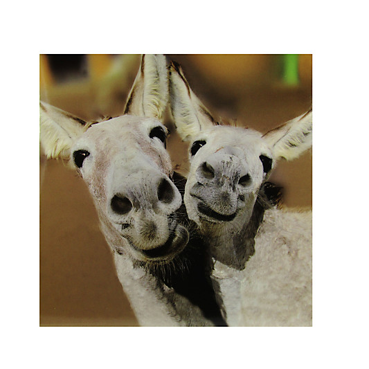 Woodmansterne Two Smiley Donkeys Greeting Card